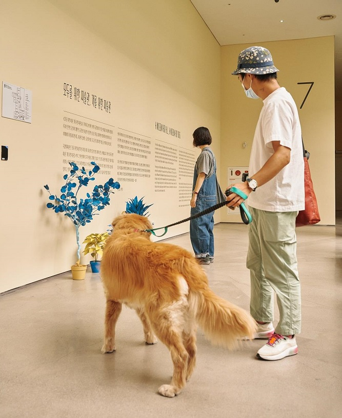 """This photo provided by MMCA on Sept 21, 2020, shows the venue of a special canine-themed exhibition titled """"A Museum For All, A Museum For Dogs"""" at the museum's gallery in Seoul."""
