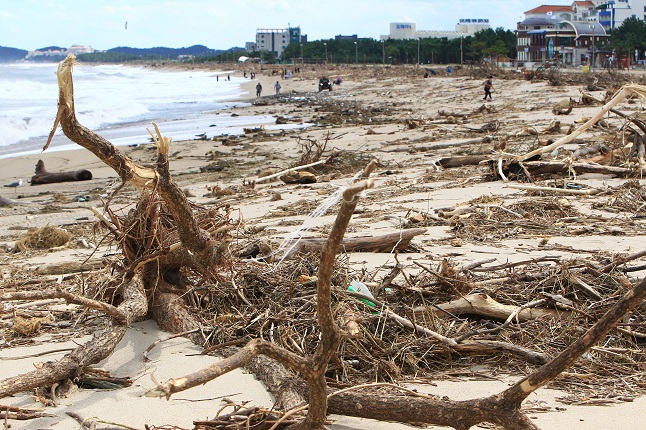 Typhoons Leave Behind Mountains of Trash on East Coast Beaches