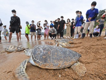 18 Endangered Sea Turtles Released into the Wild