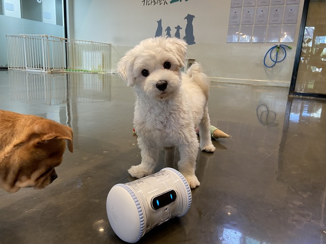 AI Robots Protect Abandoned Animals in Seoul's Gangdong District