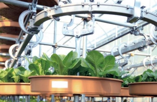 Local Firm Develops New Smart Farm System Using Trolley Conveyor Belt