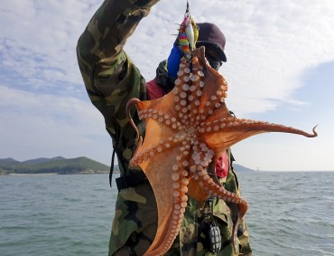 Gangwon Province Embroiled in Dispute over Octopus Fishing Ban