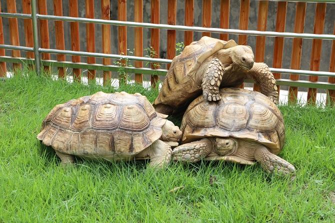 5-year-old Tortoise Saves Friend