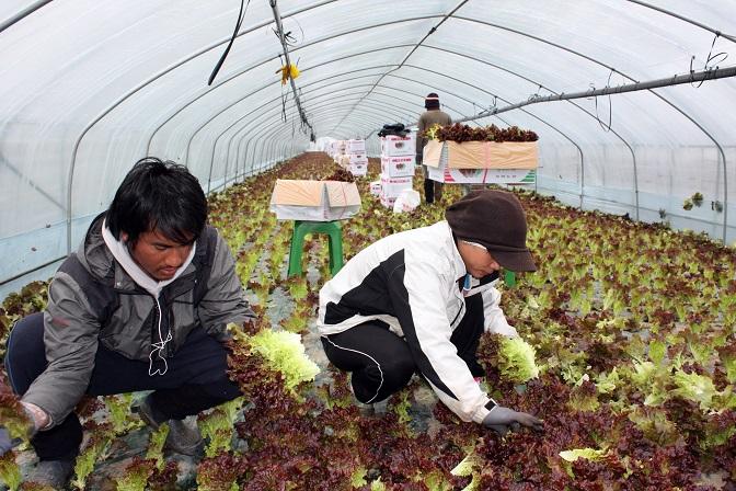 Pandemic Hampers Arrivals of Migrant Manual Laborers