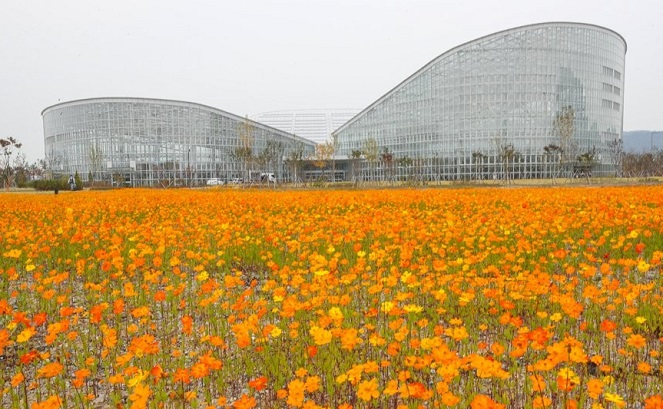 Cosmos flowers are in full bloom around the Sejong National Arboretum's four-season exhibition greenhouse on Oct. 17, 2020. (Yonhap)