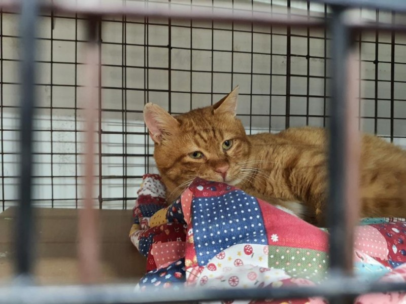 Activists Rescues Stray Cats from Redevelopment Zones