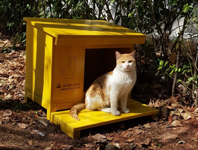 Seoul's Seocho District Sets Up Feeding Zone for Stray Cats