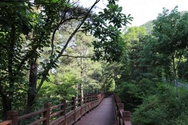 Forest Healing Programs Help to Overcome Corona Blues
