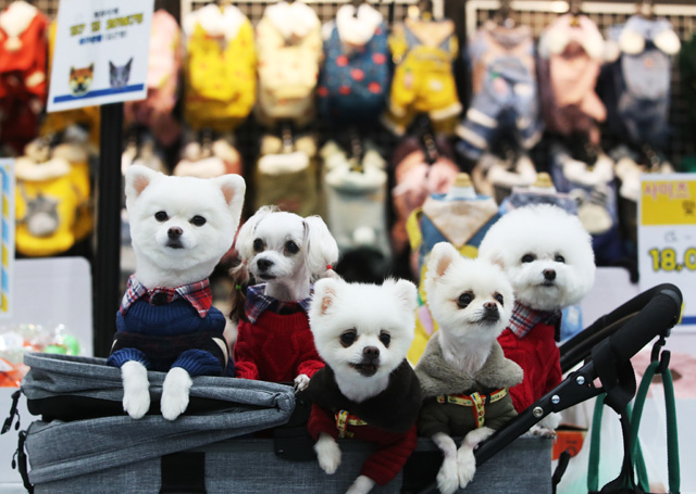 Dressed dogs sit in a buggy at a pet show in Suwon, south of Seoul, on Nov. 27, 2020. (Yonhap)