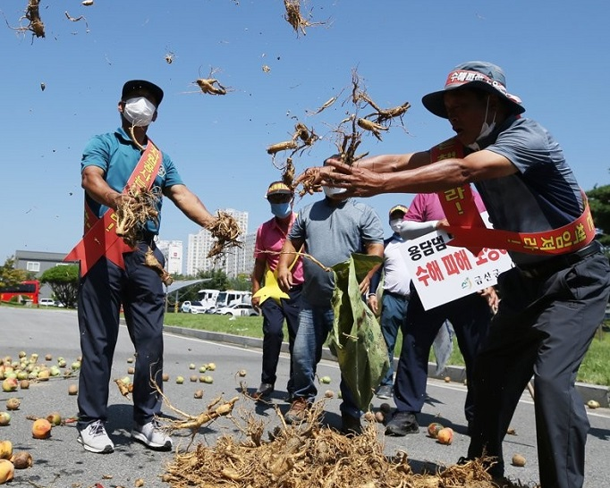 "Protestors scatter rotten peppers, Korean ginseng ""insam"" and peaches at an office of the state-run Korea Water Resources Corp. in the southwestern city of Jeonju on Aug. 19, 2020, as they hold a rally to call on the corporation to compensate them for their farm products that were destroyed by water released from Yongdam Dam in the nearby town of Jinan amid torrential rains. (Yonhap)"
