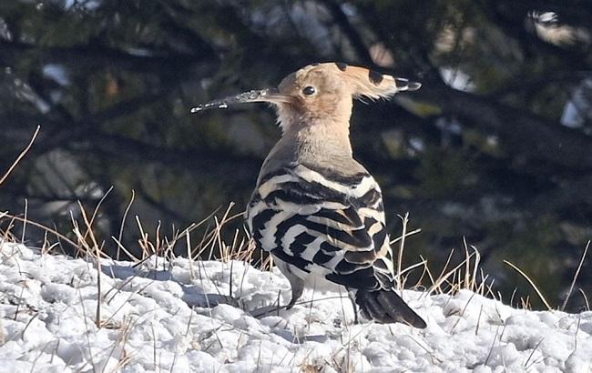 Summer Migratory Birds Remain in S. Korea for the Winter