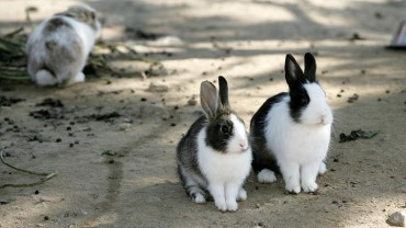 Incheon Sets Out to Improve Facilities for Rabbit Island in Public Park