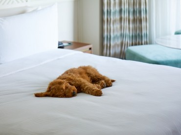 Busan's Hotels and Department Stores Woo Pet-owning Customers