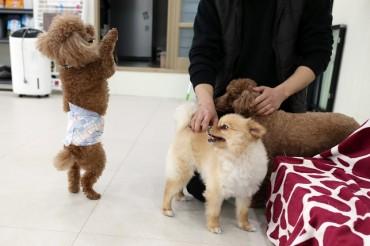 Pet Insurance Claims Up Sharply Last Year Despite COVID-19 Impact