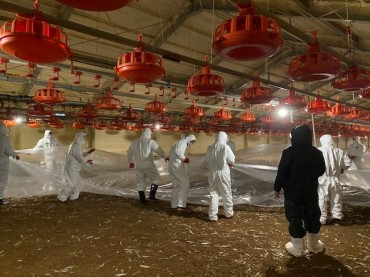 Controversy Sparks over Preventive Poultry Cull