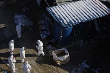 S. Korea Culls 13.6 mln Poultry as Highly Pathogenic Bird Flu Cases Near 50