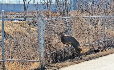 Metal Fences Set Up to Contain Animal Pandemic Pose a Risk to Wildlife