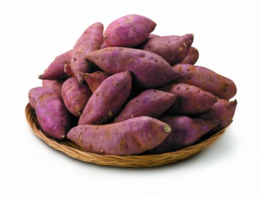 Researchers Develop Gold Sweet Potato that Thrives in Harsh Environments
