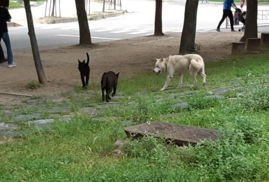 Incheon Embroiled in Controversy After Hiring Subcontractors to Capture Wild Dogs