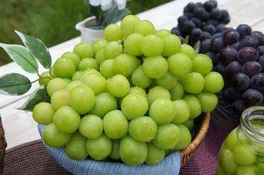 N. Gyeongsang Province Accounts for Majority of Grape Exports