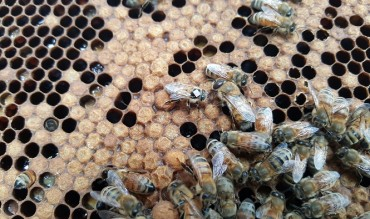 Higher Levels of Ultrafine Dust Prevent Bees from Finding Flowers