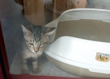 S. Korea's First Coronavirus-infected Kitten Released from Quarantine