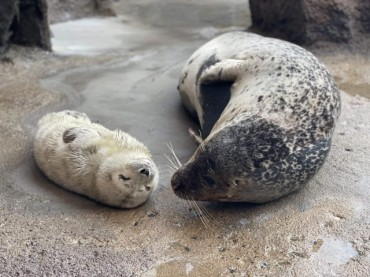 Seoul Grand Park Posts Video of Seal's Motherly Love