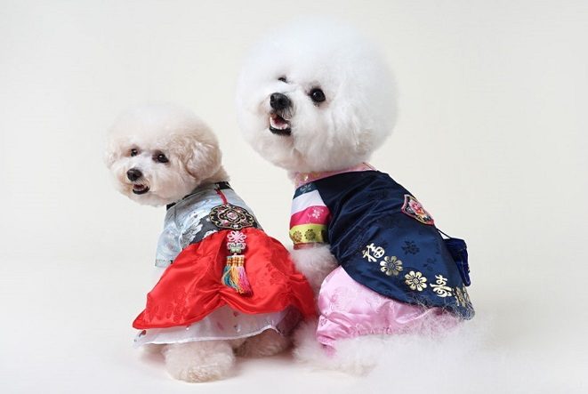 Demand for Pet Products Increases as Lunar New Year Draws Nigh