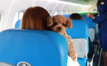 Travelers and Pets to Join in Flight Tour