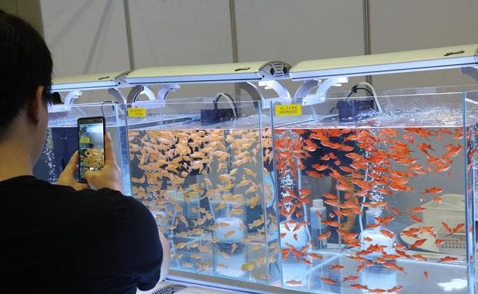 S. Korea's Pet Fish Market to Grow 35 pct by 2025