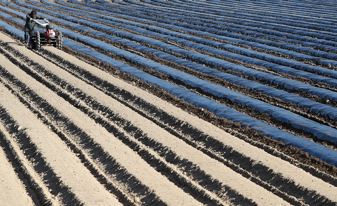 Researchers Develop Biodegradable Mulch Film to Reduce Agricultural Waste