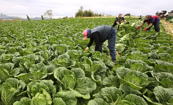 Gov't Gives Foreign Farming, Fishing Workers Immediate Access to Health Insurance