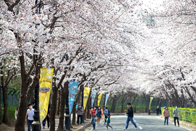 Seoul's Cherry Blossom Blooming Begins on Earliest Date on Record