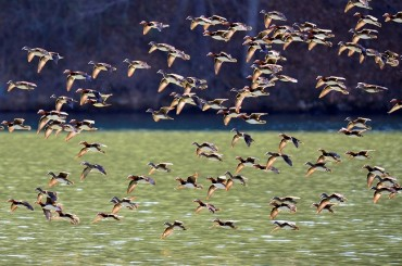 Ulsan's Taehwa River to be Listed as Flyway Habitat for Migratory Birds