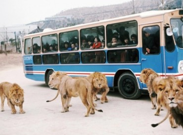 Everland's Safari Bus Retired After 45 Years of Service
