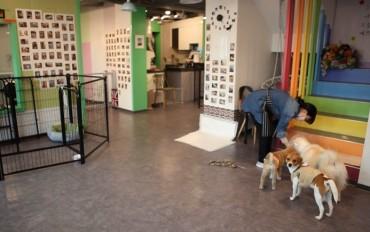 Seoul City to Test Run Downtown Animal Adoption Cafe