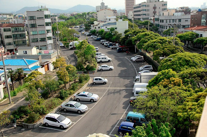 Jeju City Planting Trees to Fight Fine Dust and Heat Island Effect
