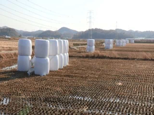 Bale silage in a field (Yonhap)