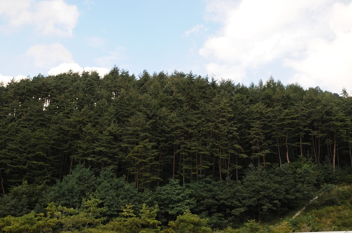 Researchers Use Pine Needles to Measure Air Pollution