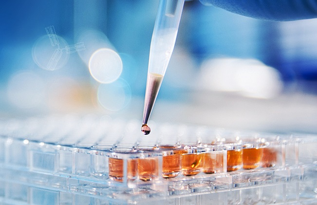 Junshi Biosciences Announces 2021 Interim Financial Results and Provides Corporate Updates