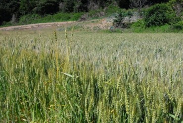 S. Korea to Up Self-sufficiency of Grains, Cut Carbon Emissions at Farms