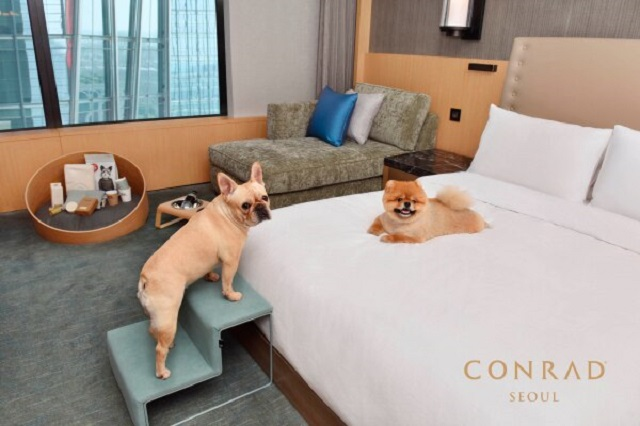 Conrad Hotel in Yeouido, Seoul offers a special room service to order handmade cakes and beef, salmon or chicken steaks made by the hotel chef for pets. (image: Conrad Seoul)