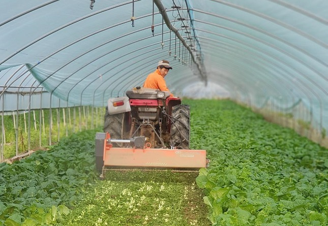 S. Korean Farmers Struggle from Labor Shortage as Pandemic Disrupts Migrant Work System