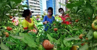 N. Korea Introduces 'Rooftop Farm' with Artificial Pond