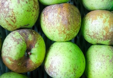 Traditionally Unpopular 'Ugly' Agricultural Products Make Way into Market