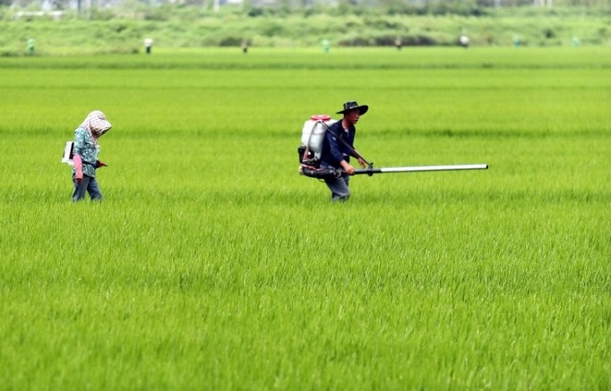 New Technology Uses Drones to Measure Acreage of Damaged Rice