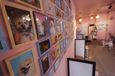Songpa District Introduces Service to Find Owners of Roadkill Pets