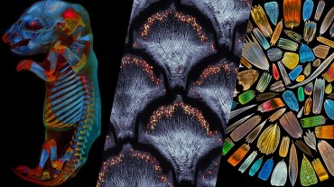 The Art of Science: Olympus Launches Third Global Image of the Year Contest